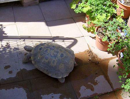 Max ventured out of his burrow for sun and water.