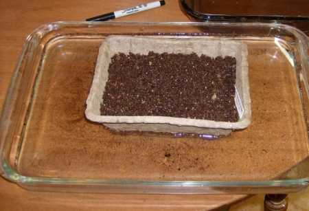 Before planting, I soaked my seed tray in water until the Jiffy Mix was totally wetted.